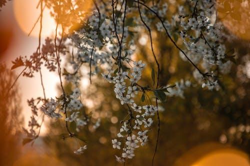 Gratis lagerfoto af blomster, flora, forårsblomster, gren