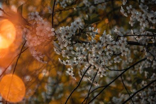 Gratis arkivbilde med anlegg, blomster, blomstre, flora