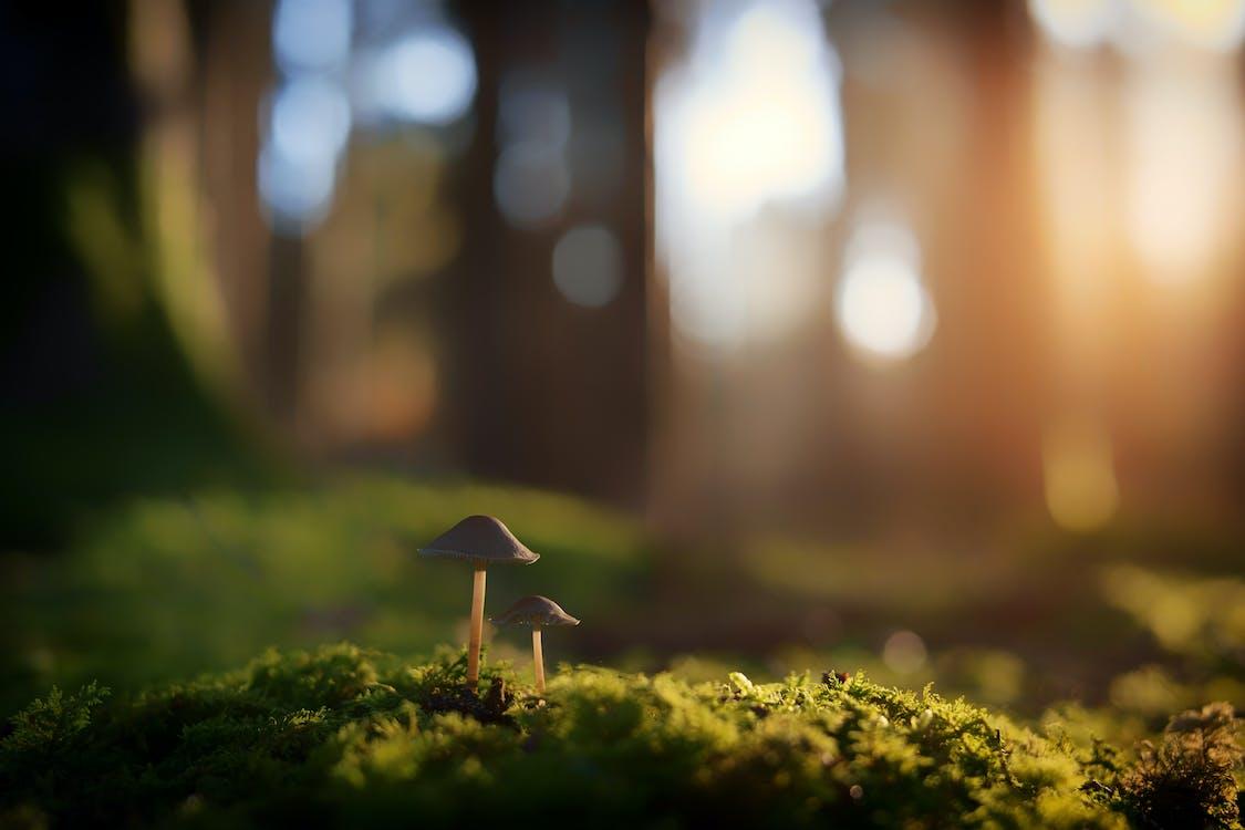 di luar rumah, jamur, jamur payung