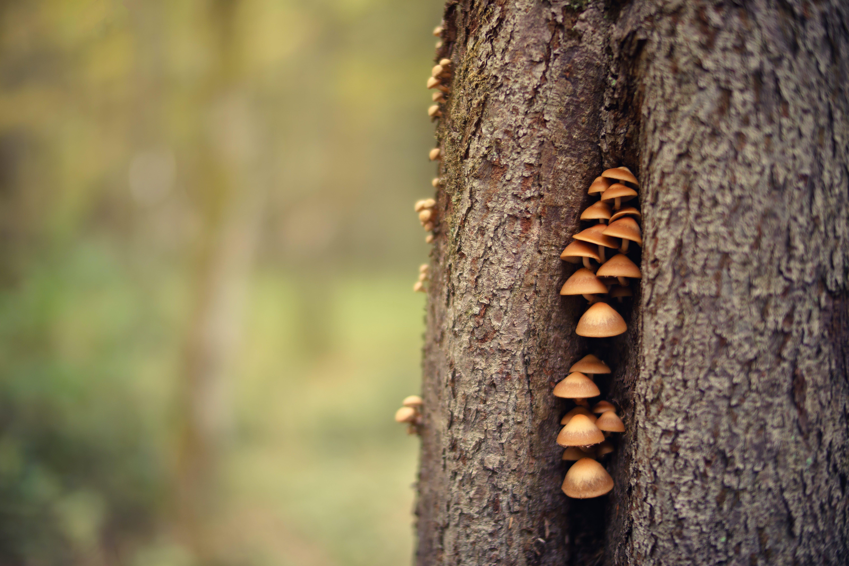 Closeup Photo Of Mushrooms On Tree Trunk