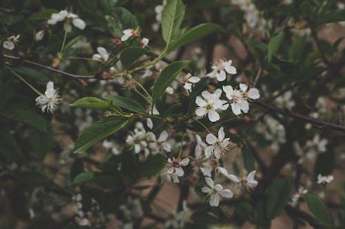 Δωρεάν στοκ φωτογραφιών με ανθίζω, άνθος, δέντρο, εποχή
