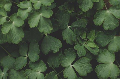 Foto stok gratis hijau, kilang, pertumbuhan