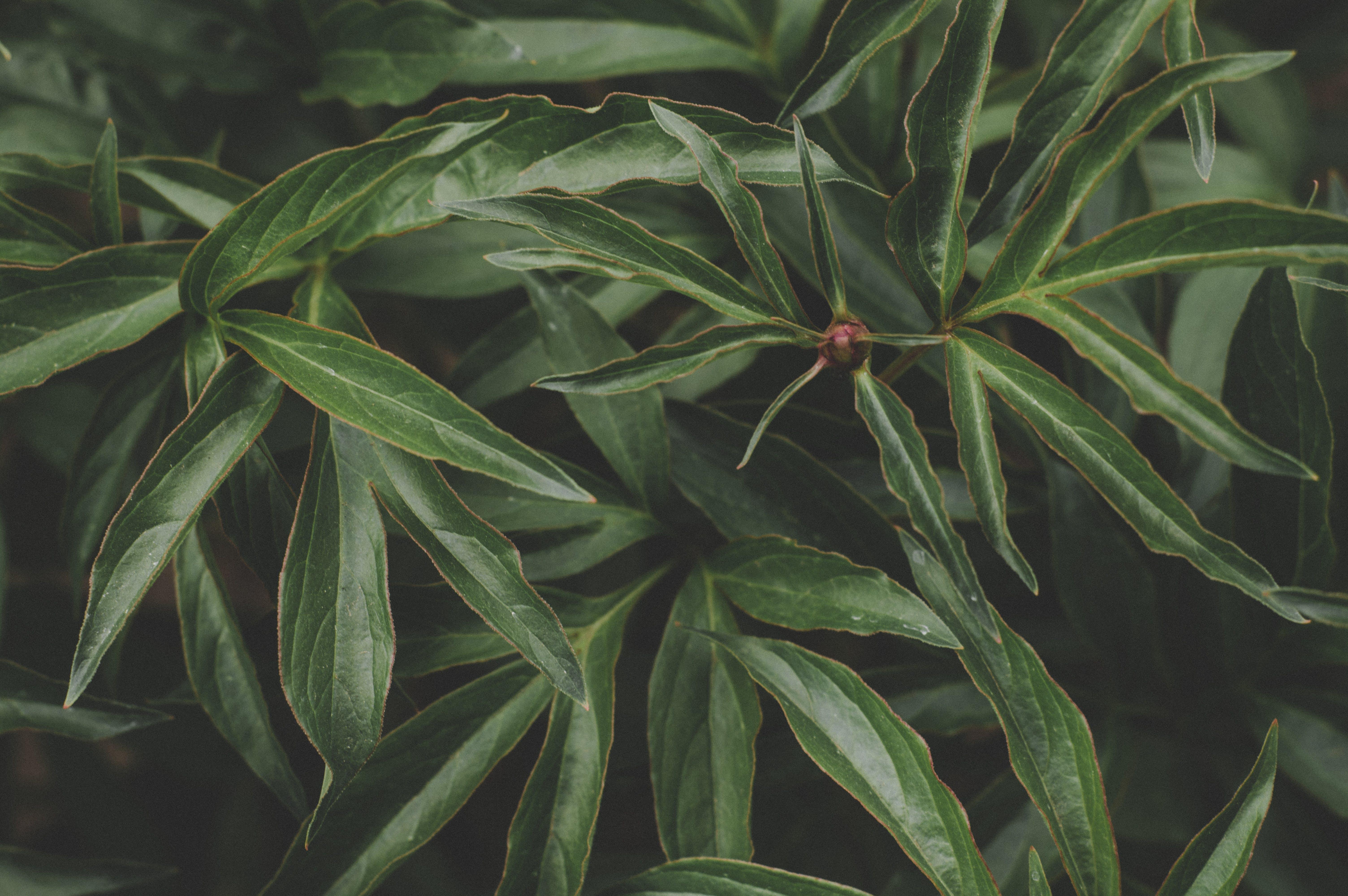 grøn, plante, vækst