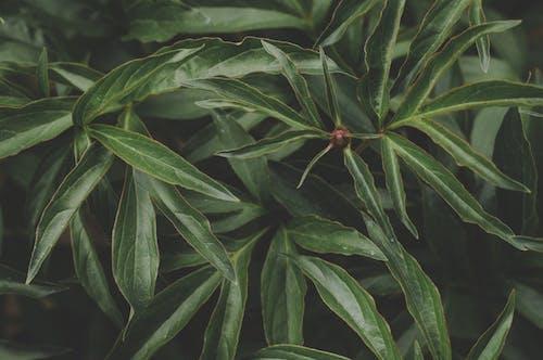 Gratis arkivbilde med anlegg, grønn, vekst