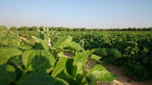 Kostenloses Stock Foto zu #plants