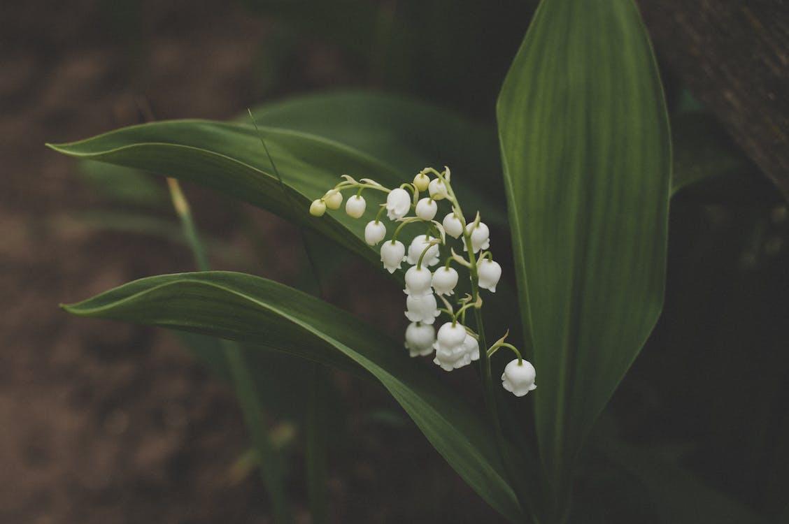 blade, blomster, flora