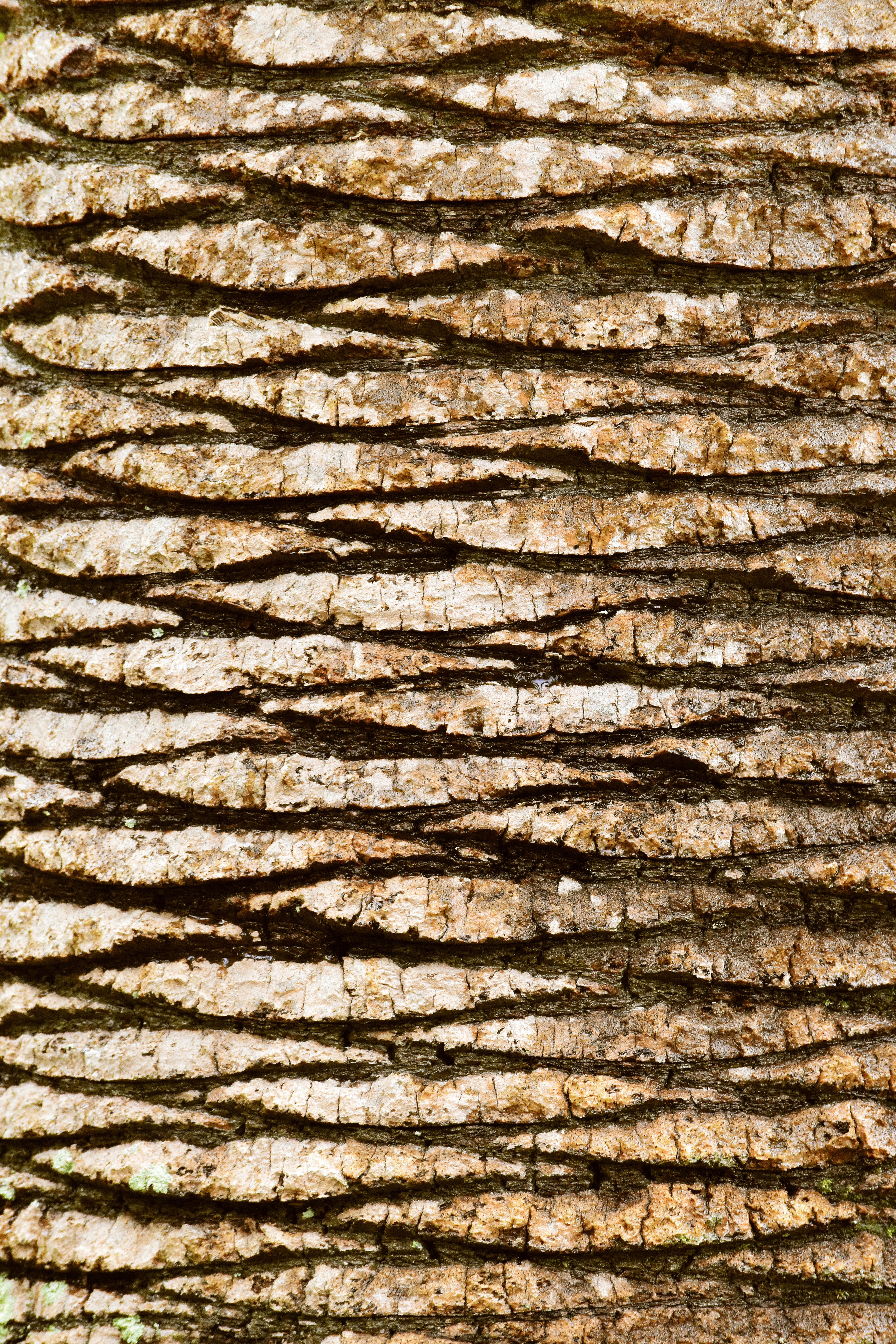 Free stock photo of bark, carving, cracks, lines