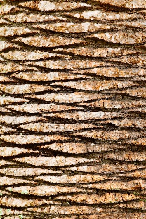 ağaç kabuğu, ahşap, avuç içi, çatlaklar içeren Ücretsiz stok fotoğraf