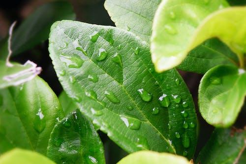 bitki, çiy, ıslak, yağmur damlaları içeren Ücretsiz stok fotoğraf