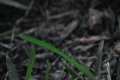 Darmowe zdjęcie z galerii z gleba, makro, ostrze, roślina
