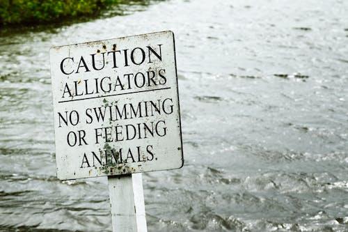 Photos gratuites de affichage, danger, eau, enseigne