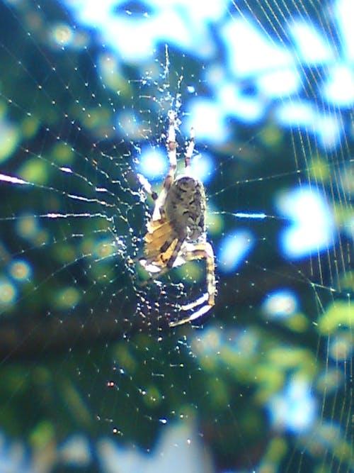 Imagine de stoc gratuită din păianjen