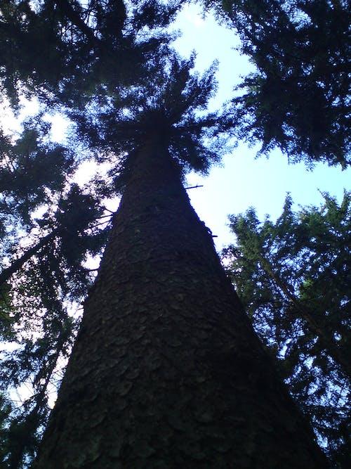 Imagine de stoc gratuită din arbori