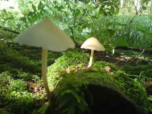 Imagine de stoc gratuită din ciuperci