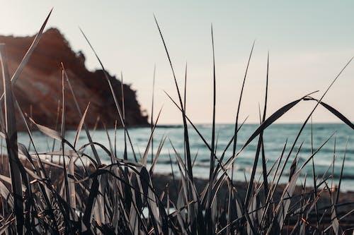 ビーチ, 岸, 工場, 海の無料の写真素材