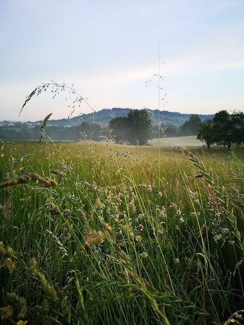 Darmowe zdjęcie z galerii z boiska, krajobraz, mglisty, niemcy
