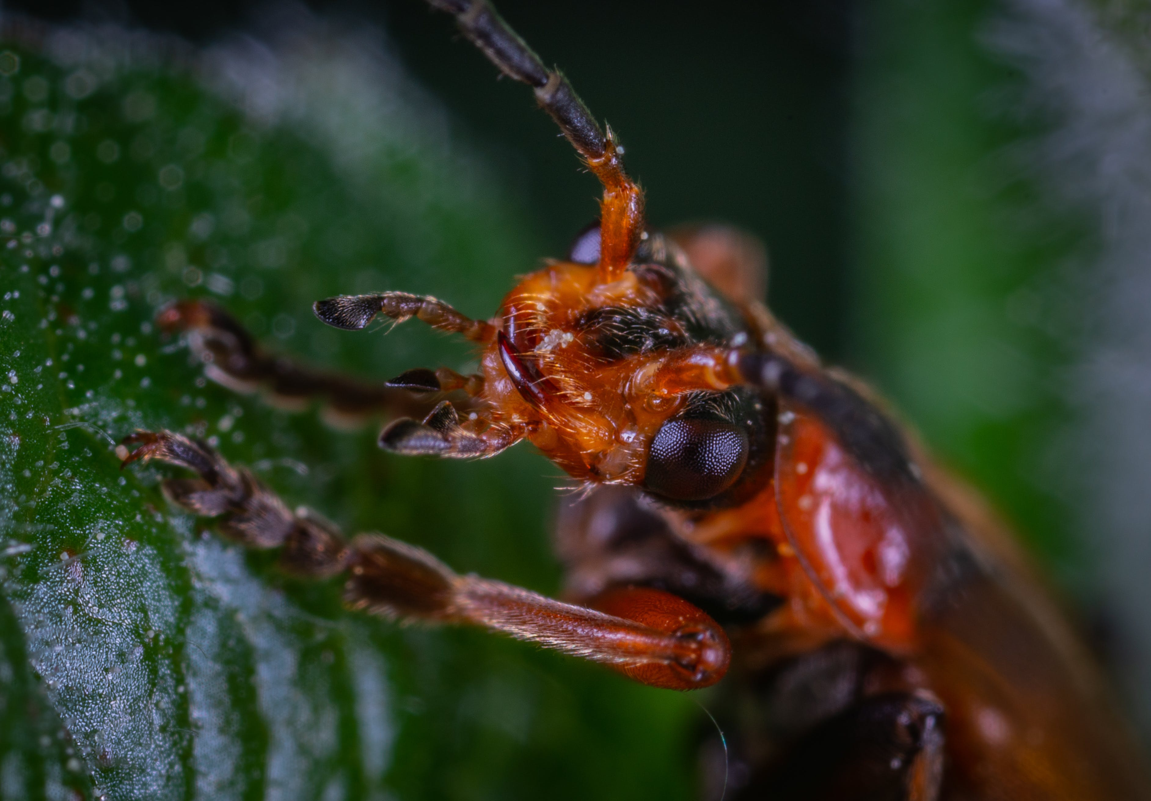 Kostenloses Stock Foto zu antenne, bug, insekt, käfer