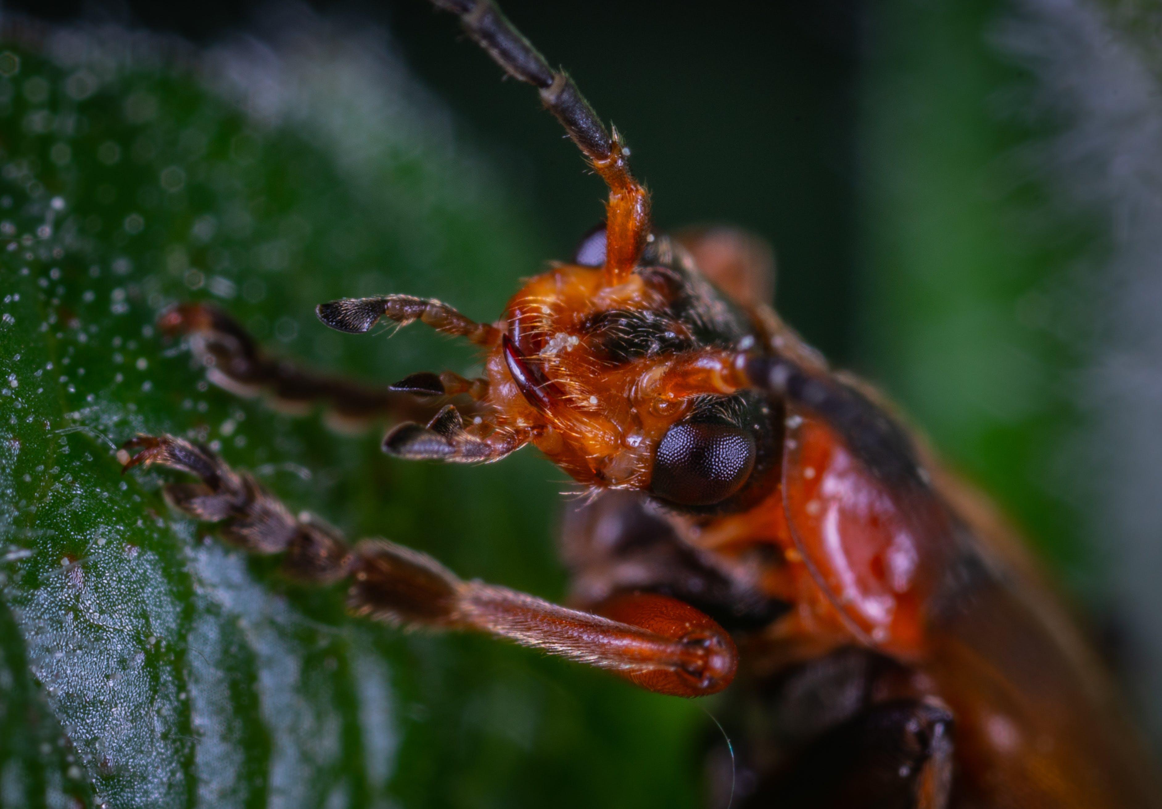 Kostnadsfri bild av bubbla, insekt, liten, makro