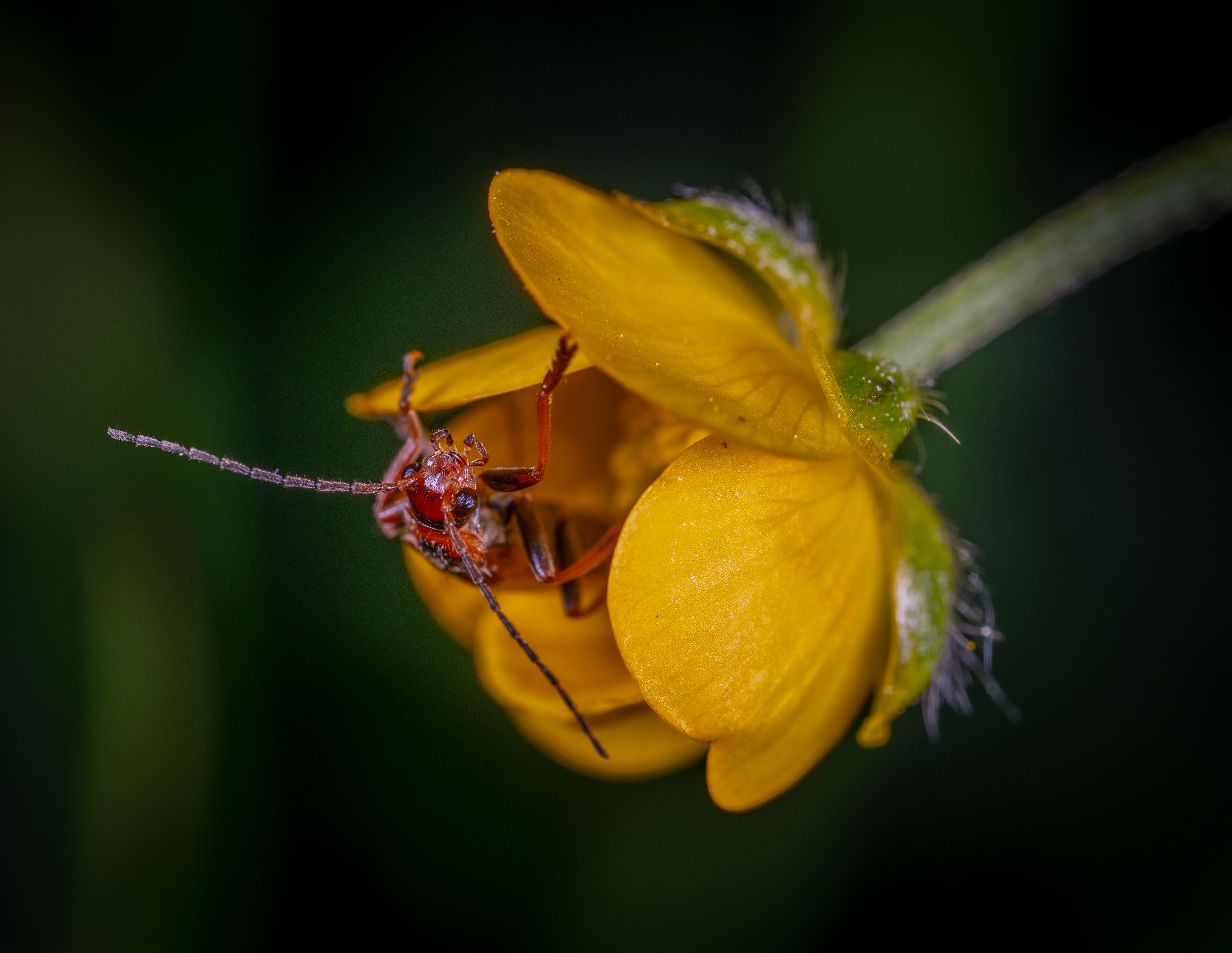 Close Up Photo of Red Insect on Yellow Petaled Flower