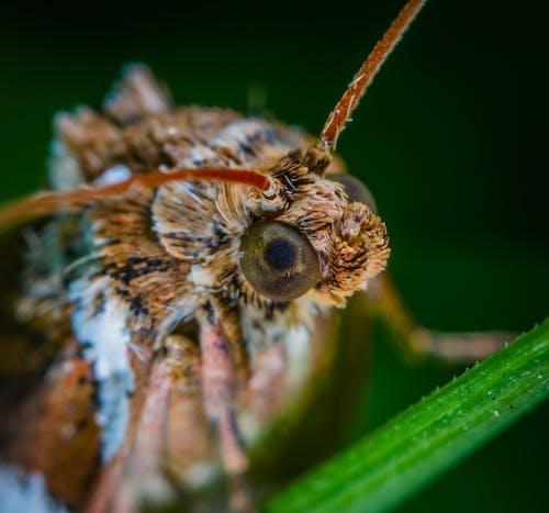 Macro Photo Of Brown Moth