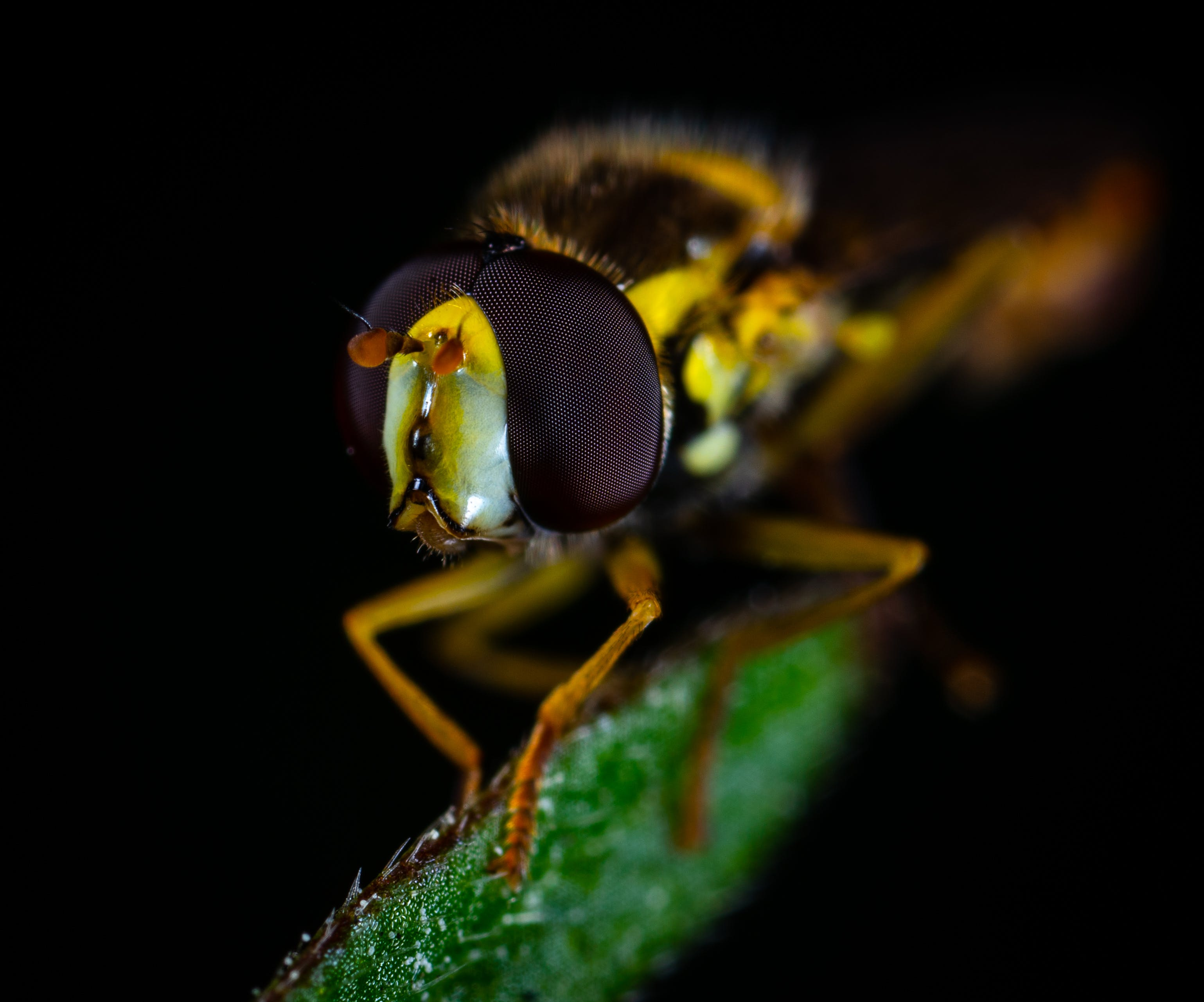 Macro Photography of Brown Fly Perched on Green Leaf