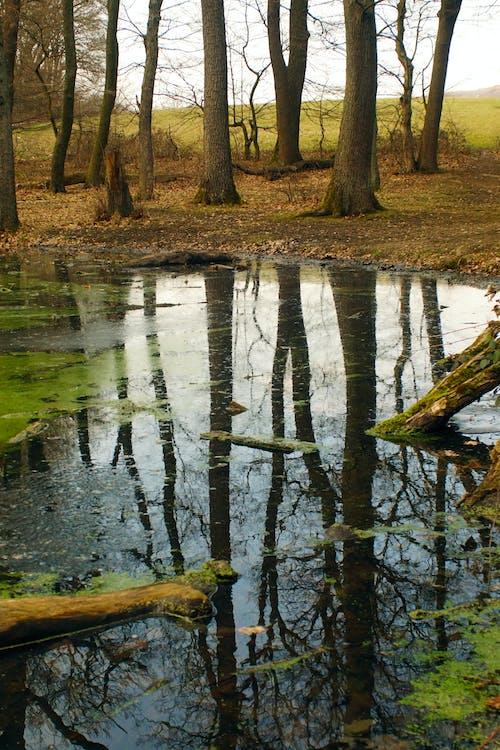 Ingyenes stockfotó erdő, fa darabok, fák témában