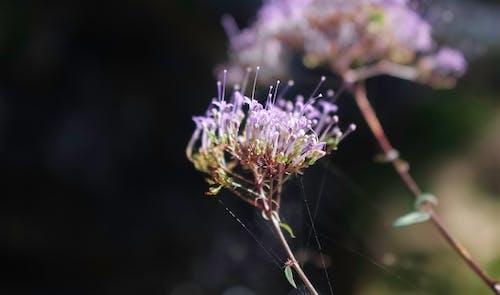 Ilmainen kuvapankkikuva tunnisteilla kauniit kukat, kellokukka