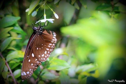 Ảnh lưu trữ miễn phí về ảnh macro, con vật, lương thành thảo, luongthanhthao.com