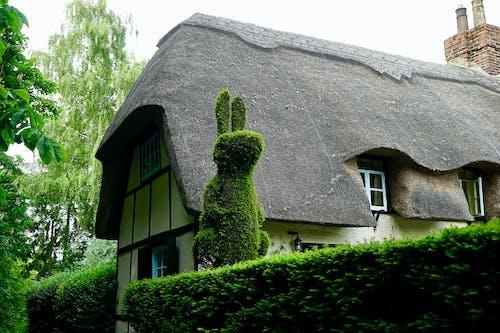 Ảnh lưu trữ miễn phí về bụi cây, cắt, cây, Con thỏ
