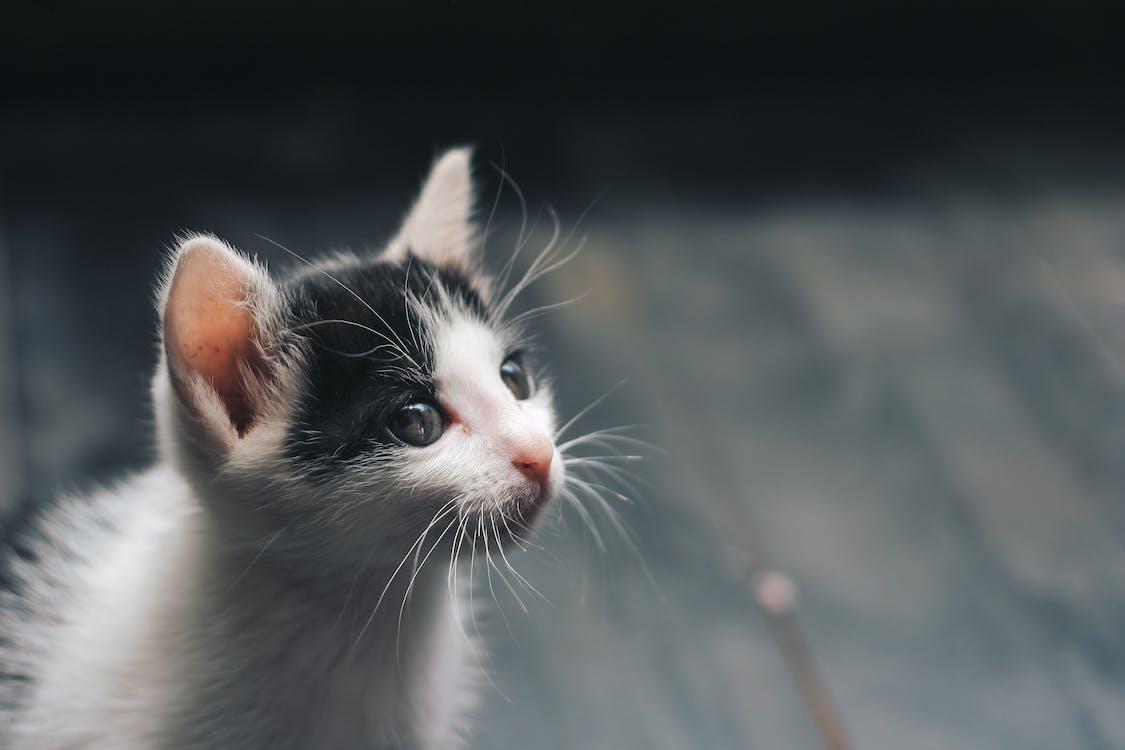動物, 可愛, 可愛的
