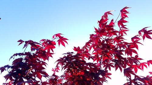 Free stock photo of #Tree, blue skies, evening sky, sunset