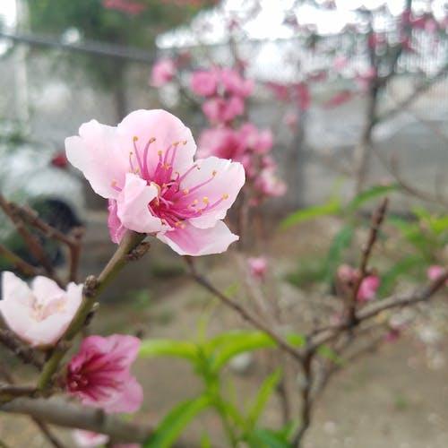 Gratis lagerfoto af blomsterplante, downtown, træ