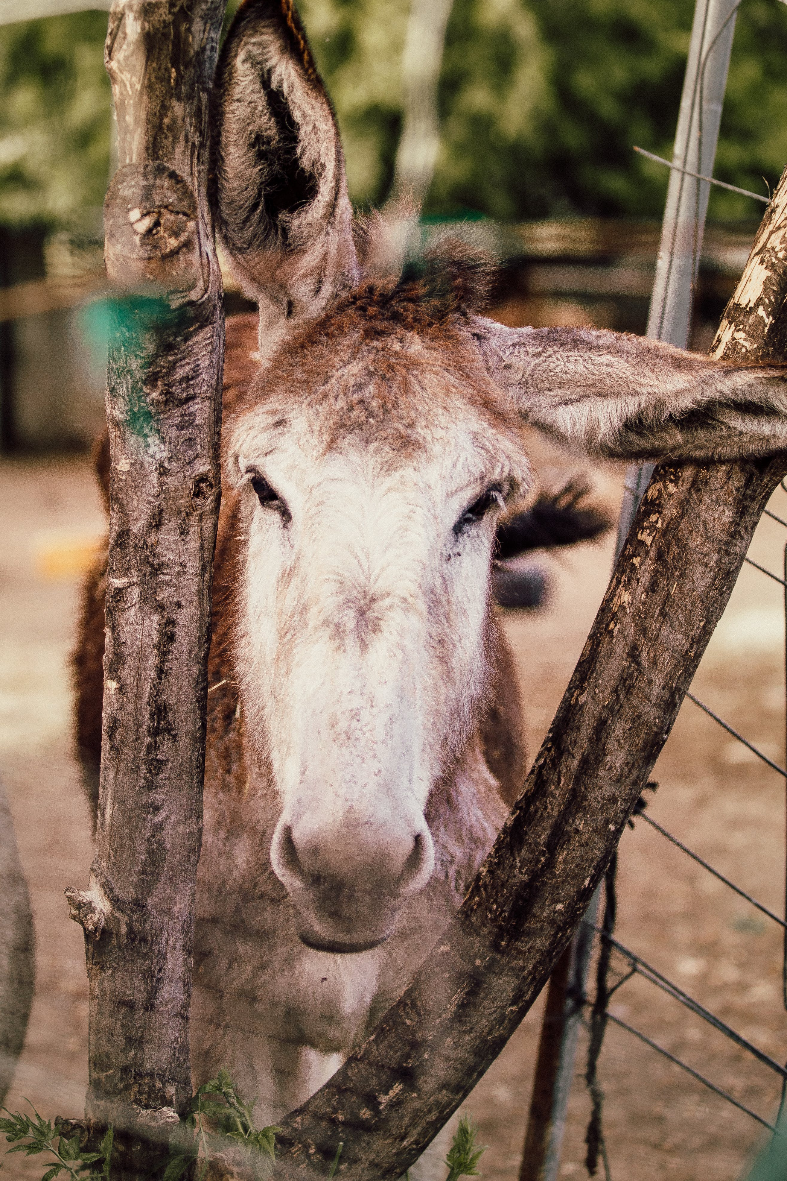 Brown Donkey Near Tree Branches