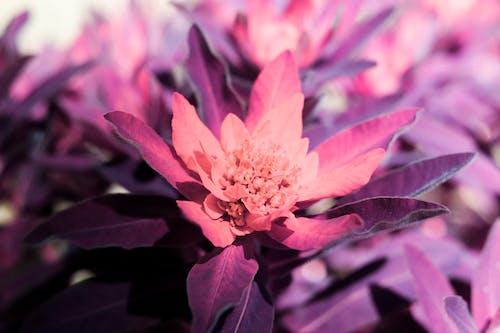 廠, 漂亮, 百合, 紫色 的 免費圖庫相片