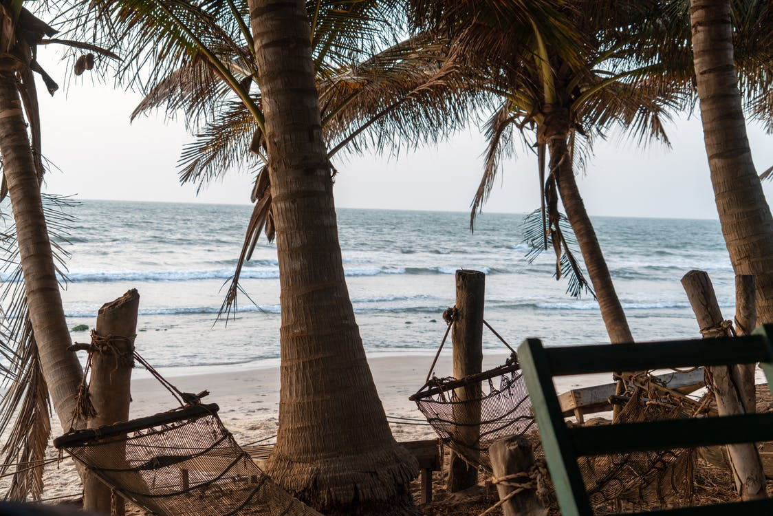 Two Brown Hammock Hanged in Coconut Trees in Front Seat