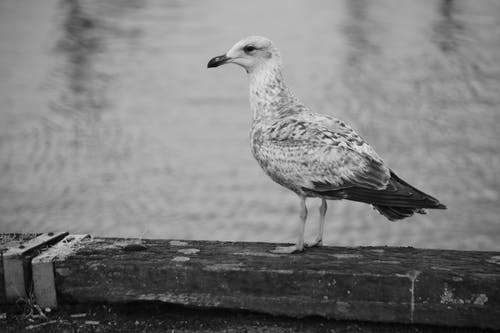Fotobanka sbezplatnými fotkami na tému animalier, bec, faune, goa © pôda