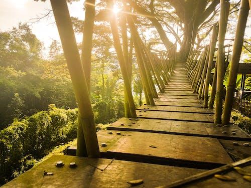 Fotos de stock gratuitas de amanecer, arboles, camino, de madera