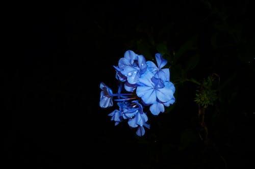 Ingyenes stockfotó éjszaka, fény, fényes, finom témában