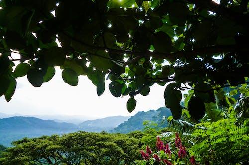 Δωρεάν στοκ φωτογραφιών με βουνά, Γαλάζια Όρη, δέντρα, λουλούδια