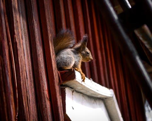 Foto d'estoc gratuïta de amor, animals, animals bufons, bufó