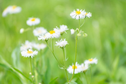 Free stock photo of flowers, green, nature, nature photography