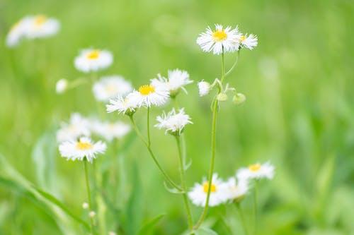 Безкоштовне стокове фото на тему «дикі квіти, заводи, зелений, квіти»