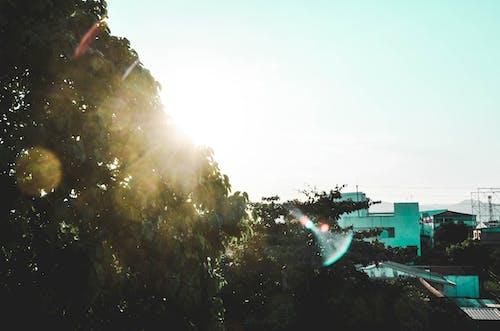 Δωρεάν στοκ φωτογραφιών με αστικό τοπίο, δέντρο, δύση του ηλίου, ελαφρύς