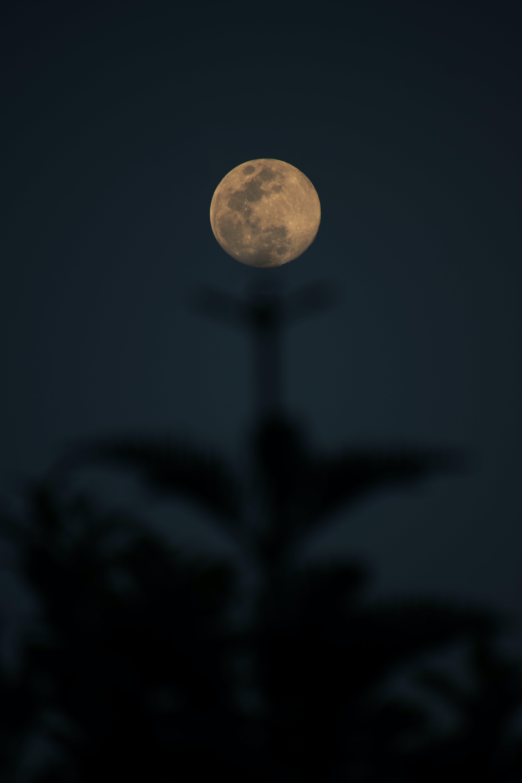 Free stock photo of full moon, moon, tree, tree top