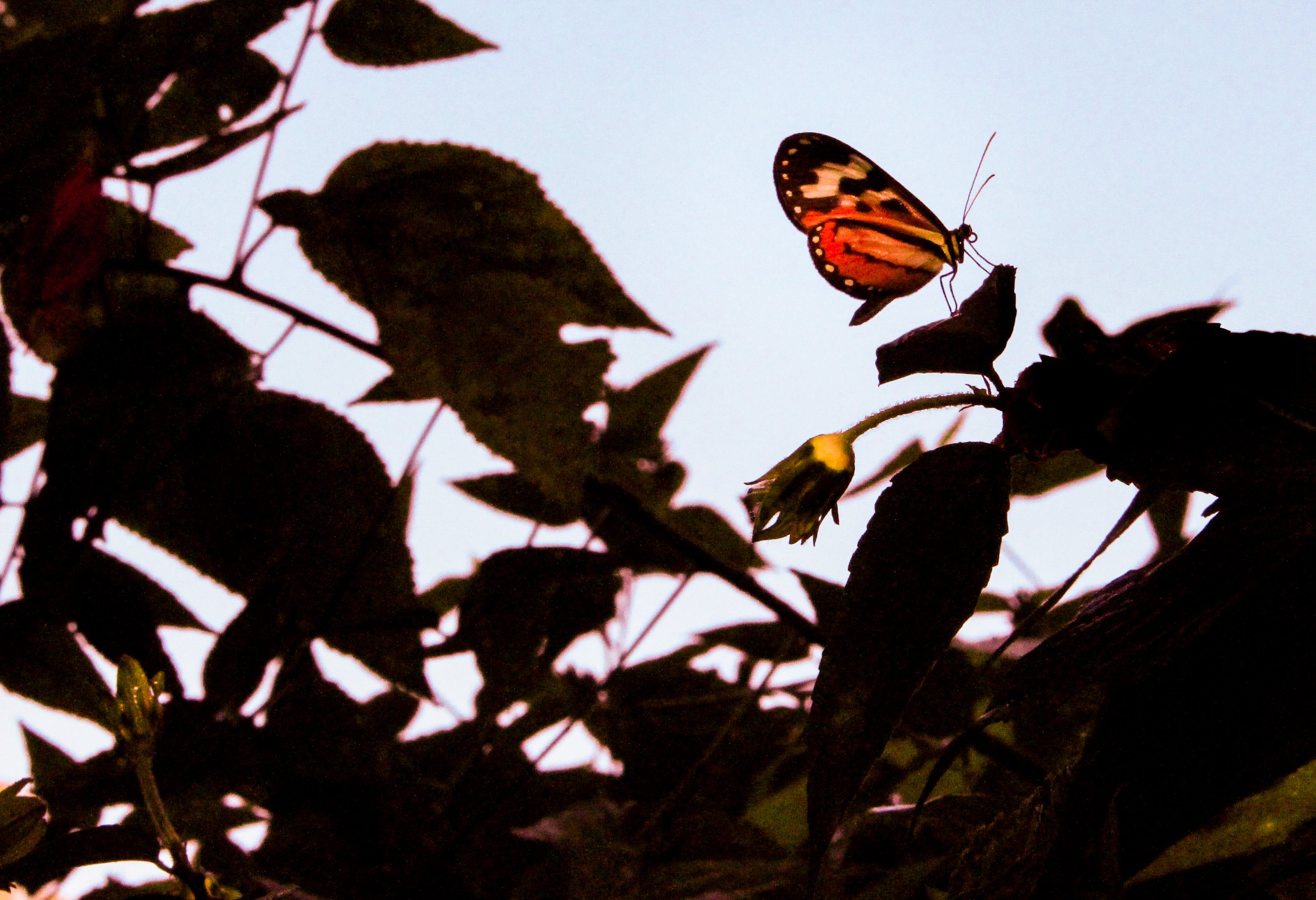 Selective Focus Photography of Red Longwing Butterfly Perched on Green Leaf