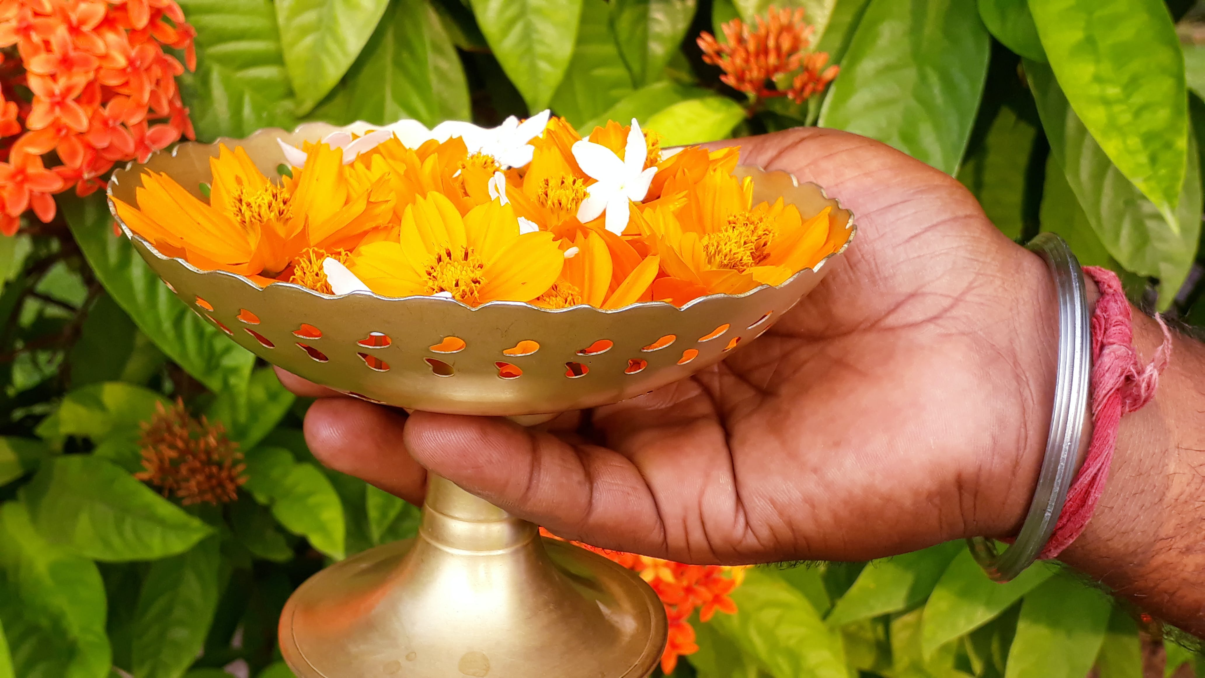 Free stock photo of flowers, flowers for worship, holding container of flowers
