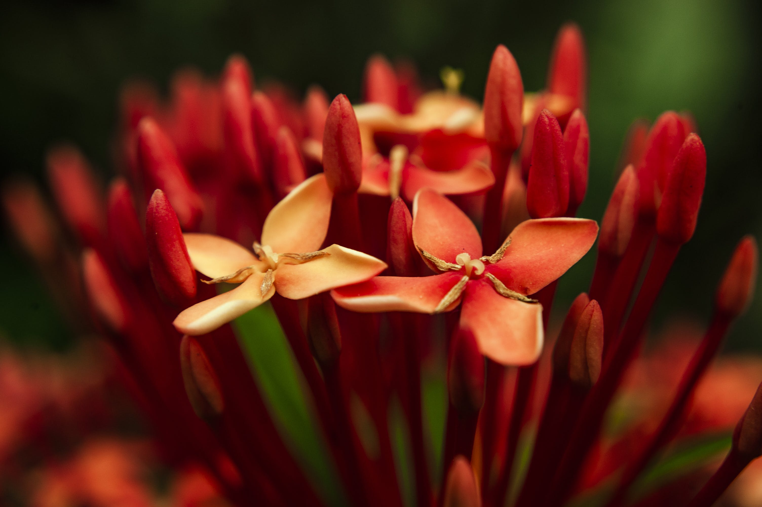 Photo of Red Petaled Flowers
