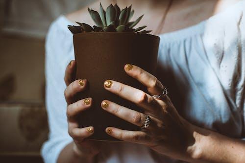 Základová fotografie zdarma na téma botanický, dospělý, holka, hrnková rostlina