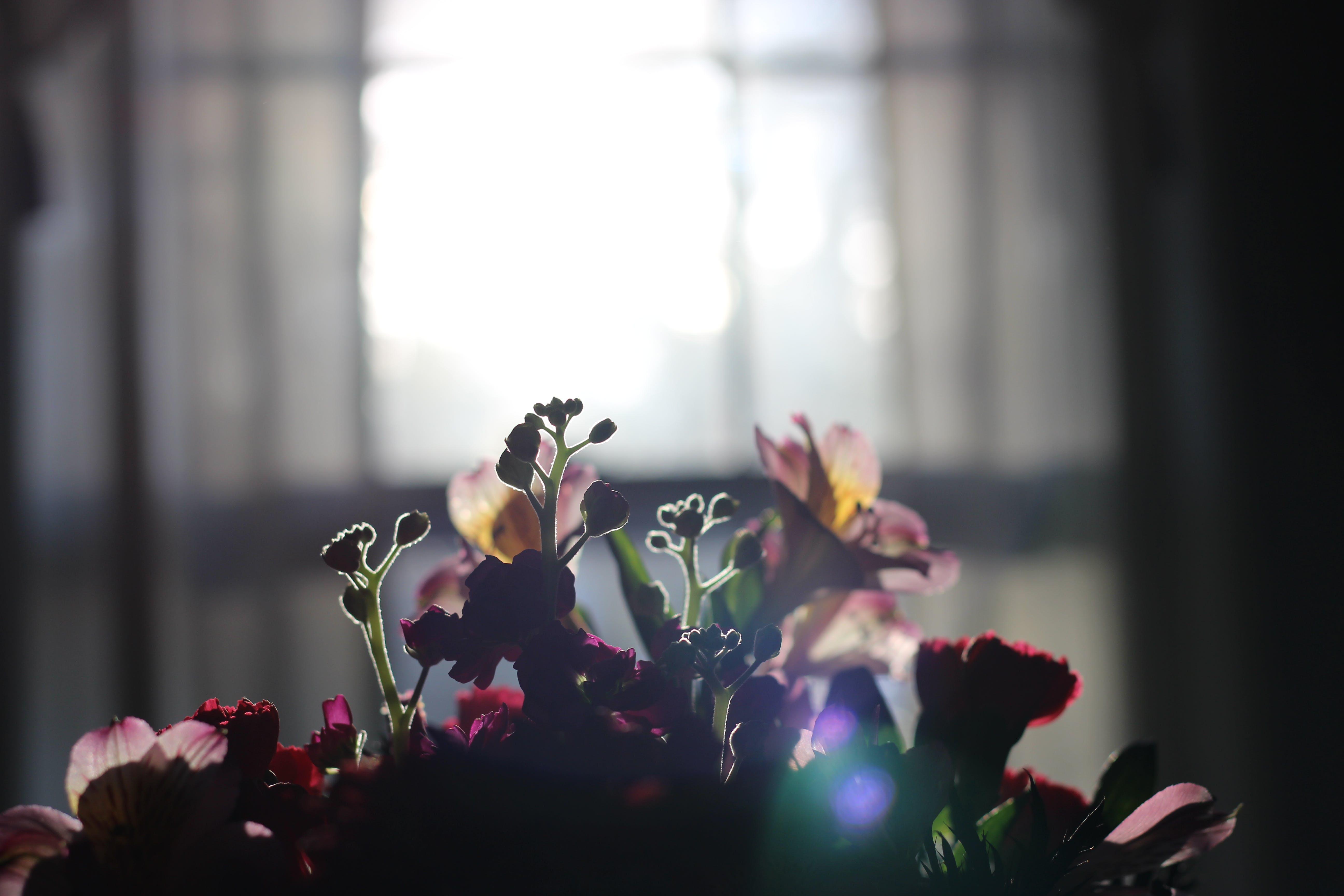 Kostenloses Stock Foto zu blumen, blumenstrauß, dekor, schöne blumen