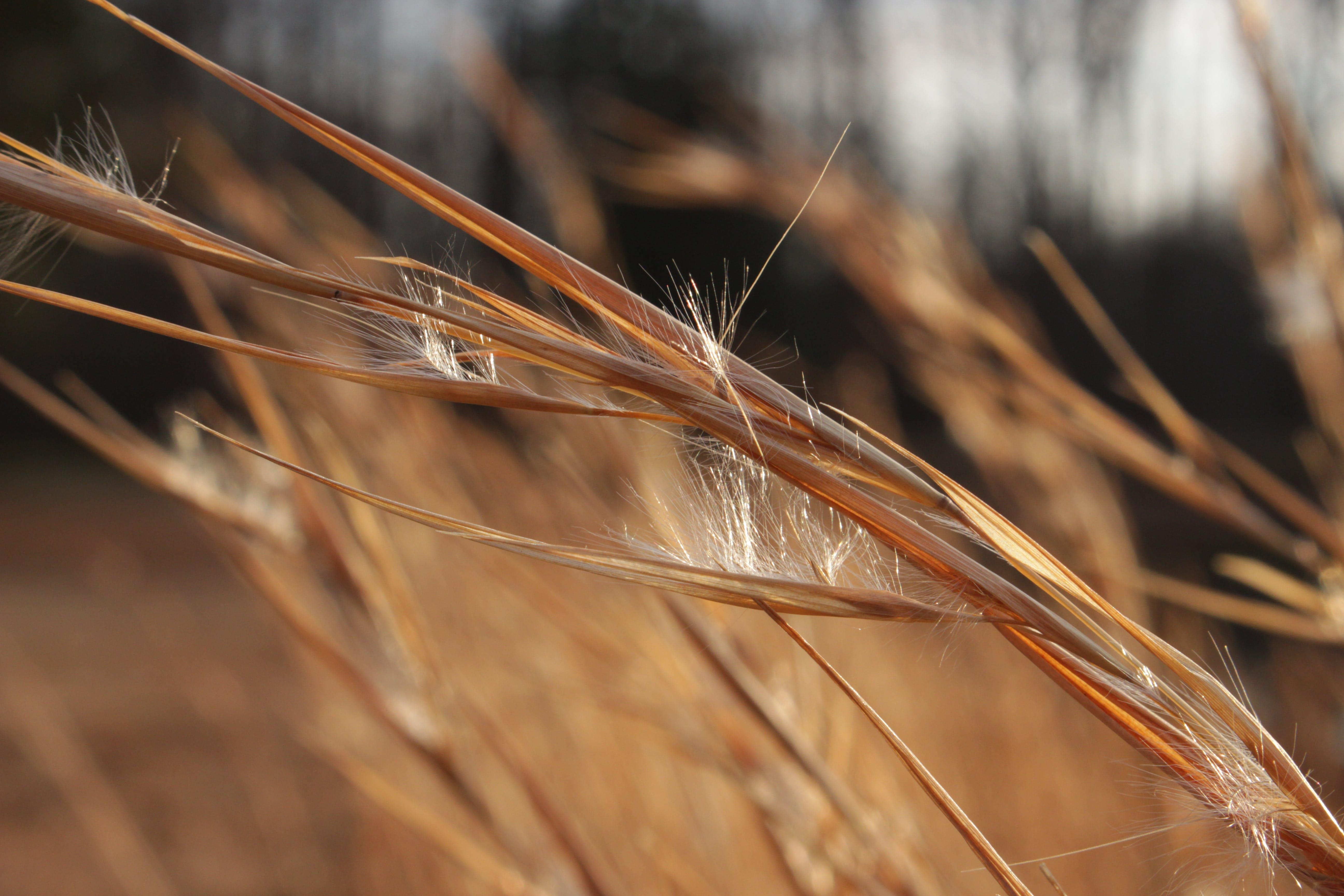 Kostenloses Stock Foto zu gras, grashalm, natur